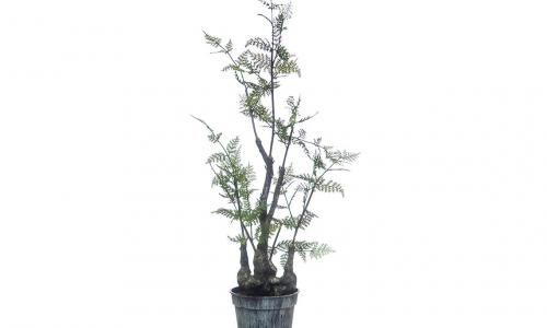 Planta artificial JOM 43185