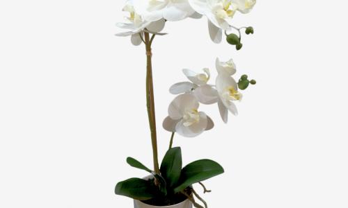 Vaso Orquidea Phalaenopsis JOM 650900000701