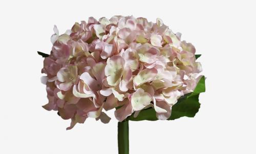 Bouquet hortense JOM 1890000000693