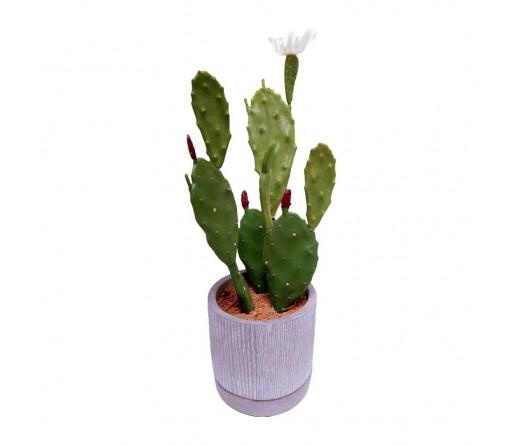 Planta cato JOM 1840700000202