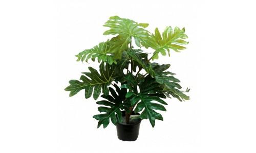 Vaso  Philodendron andreanum JOM 0477500000203